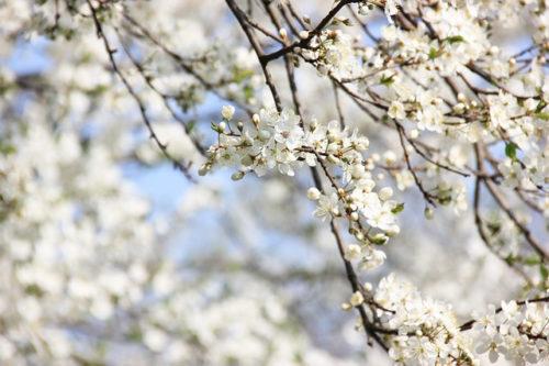 木の芽時のホルモン対策アロマWS開催!!
